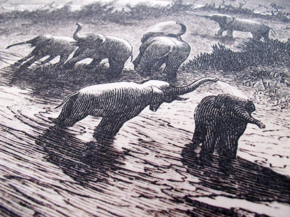 Elephants_Closeup
